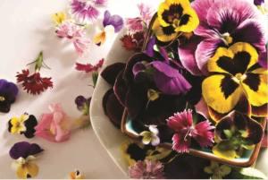 flores campinas floricultura amizade