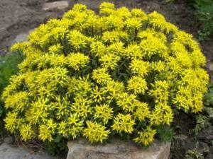 flores campinas floricultura