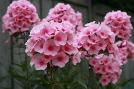 flores santo andre floricultura 4