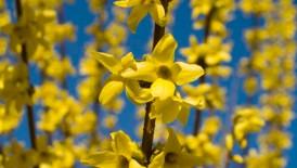 flor floricultura brasília 11