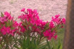 flor floricultura petropolis 01