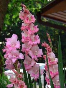 flores Campinas floricultura 3